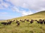 buffalo twins on tour