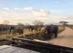 elefants safari twins on tour