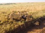 hunting safari twins on tour