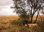 lion safari twins on tour