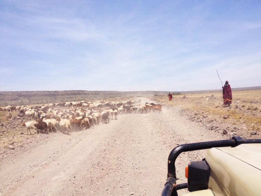masai safari twins on tour