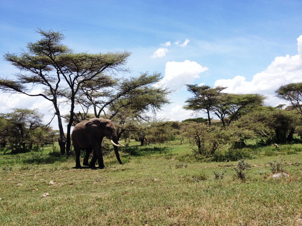 small elefant twins on tour safari