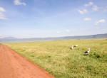 stork ngorongoro twins on tour
